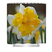 Narcissus 014-2 Shower Curtain