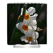 Narcissus Evening Glow Shower Curtain