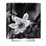 Narcissus In The Shadows Shower Curtain
