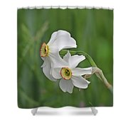 Narcissus Pair Shower Curtain
