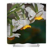 Narcissus Profile Shower Curtain