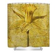 Narcissus Pseudonarcissus Shower Curtain