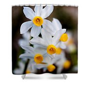 Narcissus Tazetta Shower Curtain
