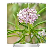 Narrowleaf Milkweed Shower Curtain