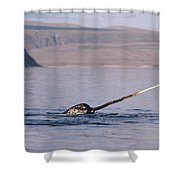 Narwhal Surfacing Baffin Isl Canada Shower Curtain