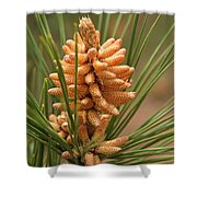 Nascent Pinecone Shower Curtain
