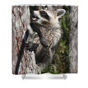 Nasty Raccoon In A Tree Shower Curtain