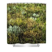 Native Grasses Shower Curtain