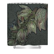 Native Plant 1 Shower Curtain