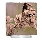 Natural Abstract 49 Shower Curtain