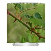 Natural Armor Shower Curtain
