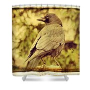 Natural Crow Shower Curtain