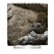 Natural Expression Of A Fowler Toad  Shower Curtain