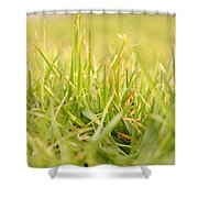 Natural Grass Shower Curtain