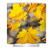 Natural Patchwork. Golden Mable Leaves Shower Curtain