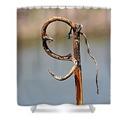 Natural S Shower Curtain