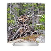 Natural Sculpture Shower Curtain