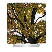 Natural Sunburst Through Autumn Tree Shower Curtain