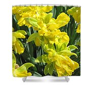 Naturalized Daffodils On The Farm Shower Curtain
