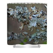 Naturally Abstract Shower Curtain