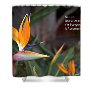 Nature Does Not Hurry Bird Of Paradise Shower Curtain