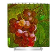 Nature Goodness Grapes On The Vine Shower Curtain