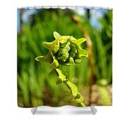 Nature Green Fern Frond Unfolding Art Prints Ferns Shower Curtain