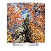 Nature In Art Shower Curtain