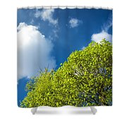 Nature In Spring - Bright Green Tree And Blue Sky Shower Curtain