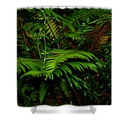 Nature In The Pacific Nw Shower Curtain