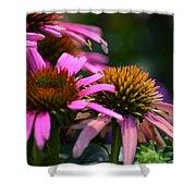 Nature Made Echinacea Shower Curtain