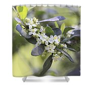 Nature Path Flower Shower Curtain