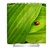 Naturellement Complementaire Shower Curtain