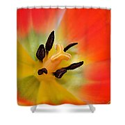 Nature's Amazing Colors Shower Curtain