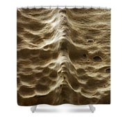 Natures Backbone Shower Curtain