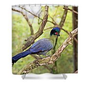 Natures Beauty Shower Curtain by Aimee L Maher Photography and Art Visit ALMGallerydotcom