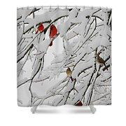 Nature's Christmas Ornaments Shower Curtain