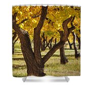 Natures Gold 2 Shower Curtain