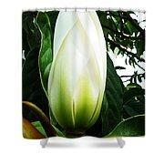Nature's Light Bulb Shower Curtain
