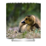 Nature's Lil Wonder Shower Curtain by Skip Willits