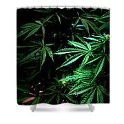 Nature's Medicine Shower Curtain