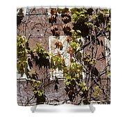 Nature's Mosaic Shower Curtain