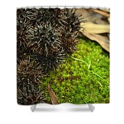 Nature's Moss And Sweetgum Pods Shower Curtain