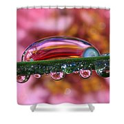 Nature's Ornaments Shower Curtain