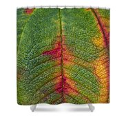 Natures Ornaments Shower Curtain