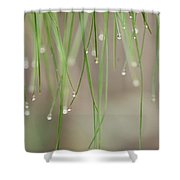 Nature's Soft Reflections Shower Curtain