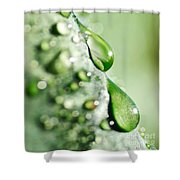 Nature's Teardrops Shower Curtain
