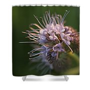 Natures Treasures Shower Curtain
