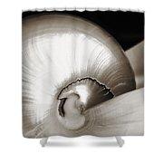 Nautilus Shell Sepia Shower Curtain