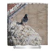 Nazare Pigeon Shower Curtain